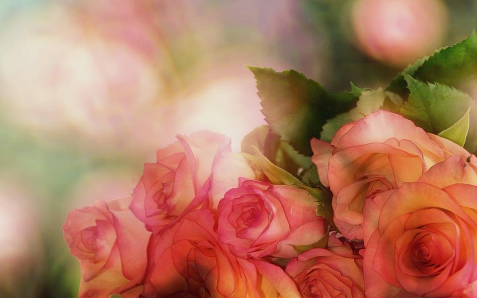 roses-3141486_960_720